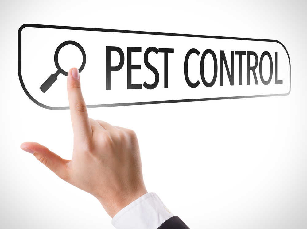 contact-ikari-if-you-have-a-pest-problem-at-your-home