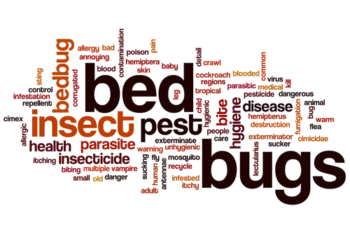 bed-bug-control