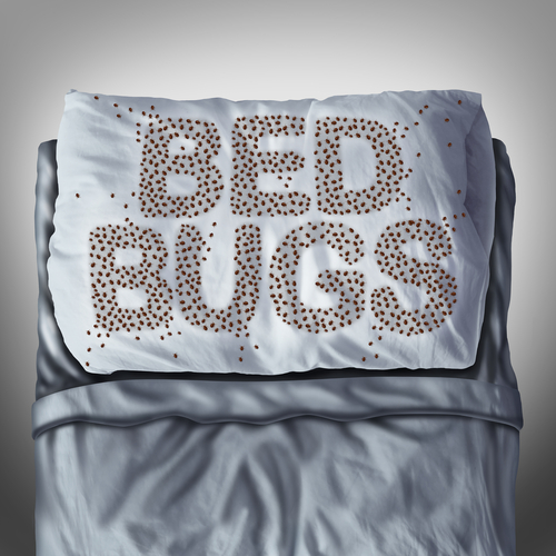 bed-bug-control-in-singapore